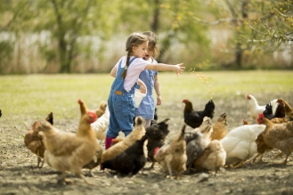 children-and-chickens