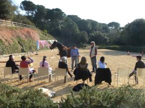 coaching caballos